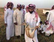 """بمناسبة """" اليوم الوطني 88 """" بلدية ابوعجرم تطلق غزلان وأرانب برية في حديقة ميقوع"""